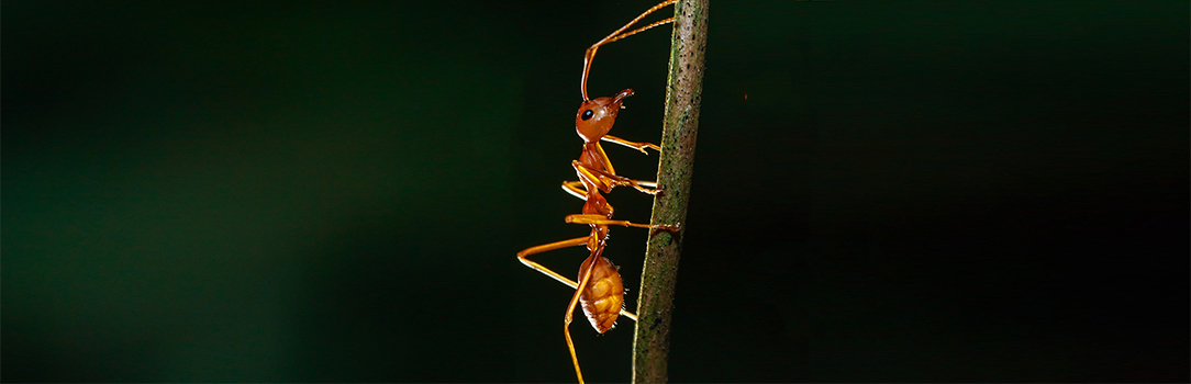 Tackling invasive species