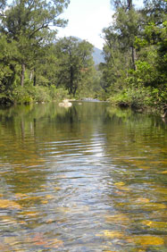 Report on NSW rivers