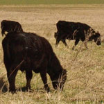 Study Animal Nutrition at UNE