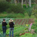 Two people standing in the middle of a vegetable farm paddock