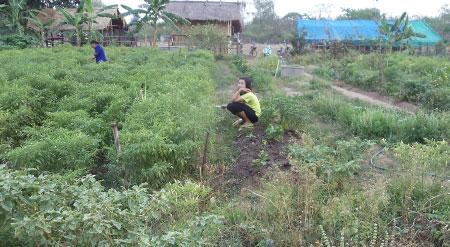 Community garden in the Kusuman district, Thailand