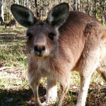 Study Wildlife Ecology at UNE