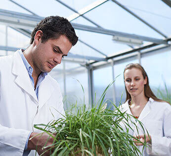 In the UNE greenhouse, a male research student in a white lab coat is looking down at the leaves of a plant while a female research student looks on.
