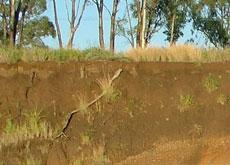 soil profile of an eroding river bank