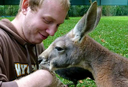 UNE Exchange student feeding a kangaroo