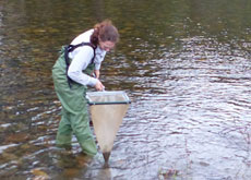 Researcher working in a river