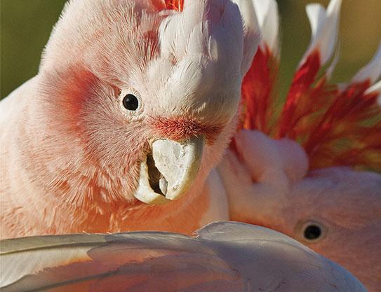 Book disputes 'bird-brain' myth