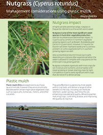 Nutgrass management considerations using plastic mulch