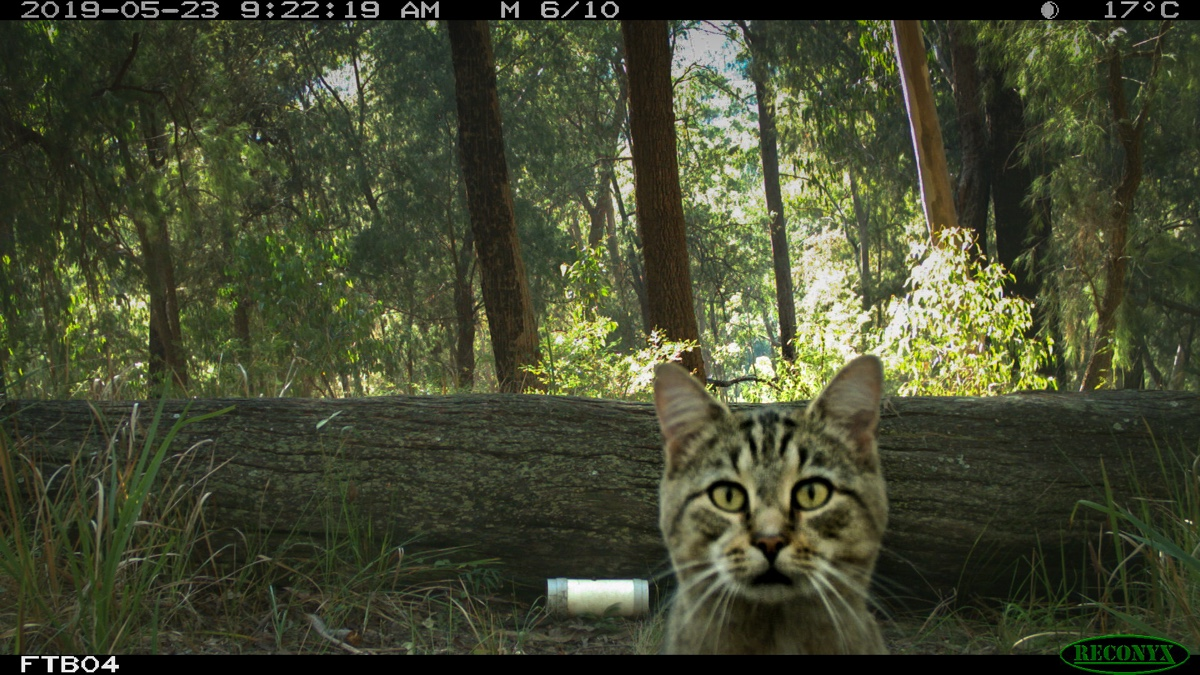 Cat caught on camera trap