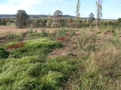 Community Garden site
