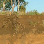 Study Soil Science at UNE