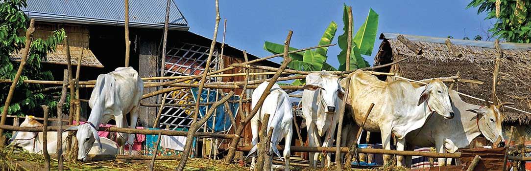 Capacity building in Cambodia