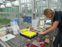 Organic amendments in soil: student completing glasshouse research