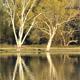 wetlands.jpg