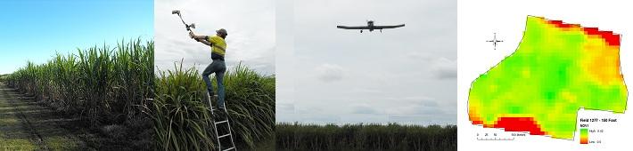 Sugarcane banner