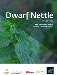 Dwarf nettle management guide