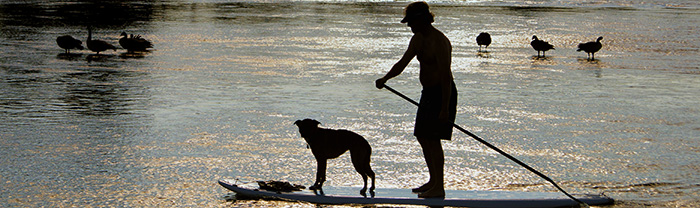 Man and dog on a water ski on a peaceful lake