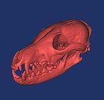 3D reconstructin