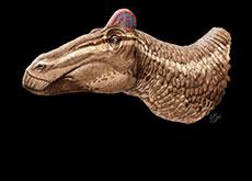 Head of Edmontosauraus Regalis Dinosaur