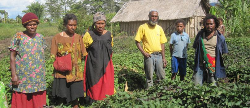 Sweetpotato farmers standing in a field in Papua New Guinea