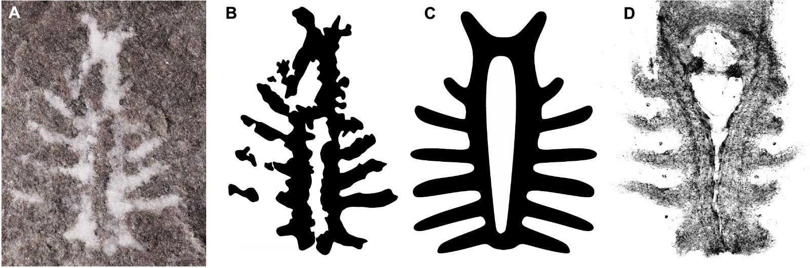 310-Million Year Old Fossil Sheds Light on Horseshoe Crab Brains