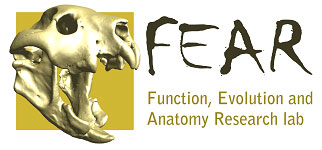 The Function, Evolution and Anatomy Research Lab