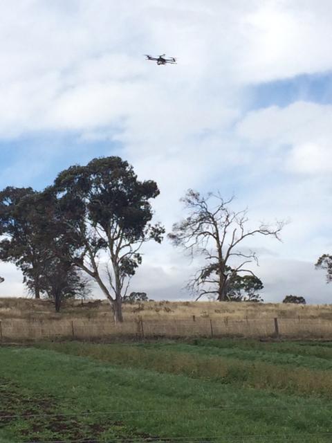 Drone over pasture