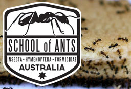 School of Ants logo with ants on food in the background