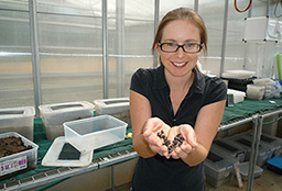 Jean Drayton with the dung beetles she is researching